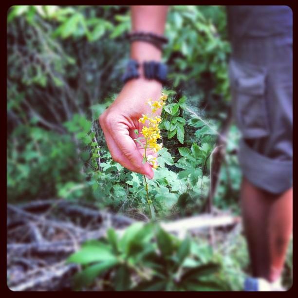 #AbocAseminar e le piante medicinali