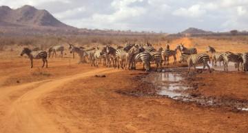 Safari allo Tsavo Est