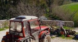 Coltivazione dello zafferano in Umbria