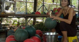 Volontariato in Cambogia