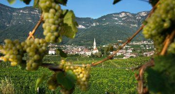 Alto Adige, vacanza a Caldaro