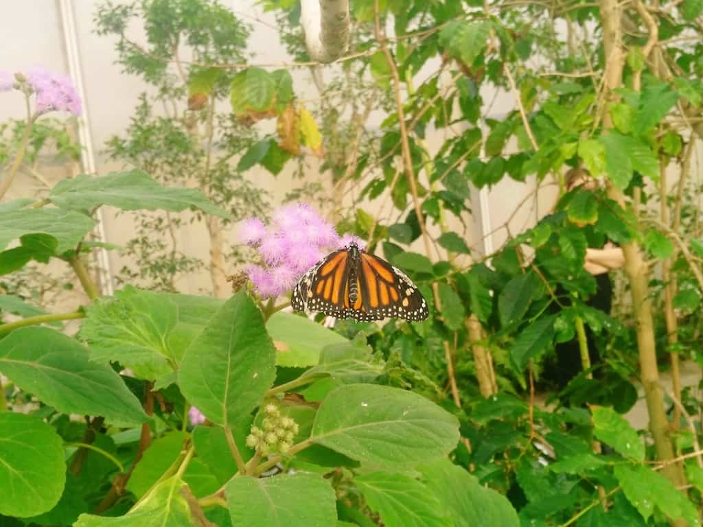 Cervia, la Casa delle Farfalle per grandi e piccini