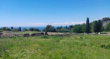 San Vincenzo, Un Mare di Gusto Palamita in Fiore