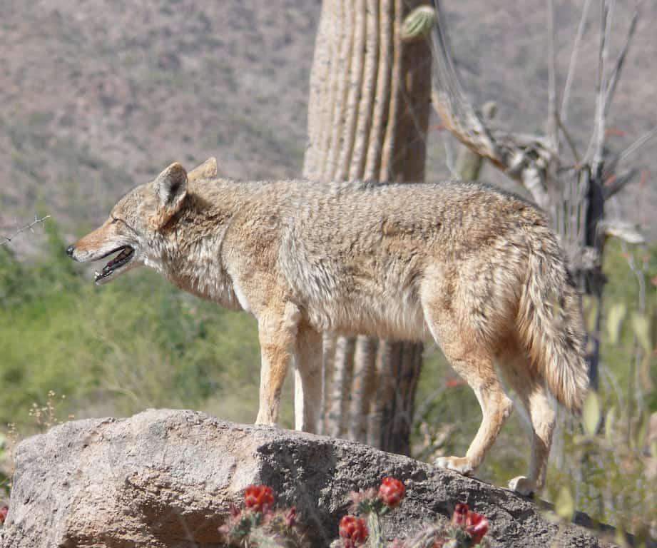 Concorso fotografico, vinci la Baja California
